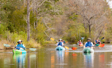 Group Canoeing and Kayaking - Okefenokee Swamp