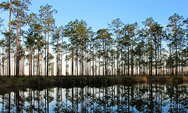 Auto Tour Route View - Okefenokee Swamp