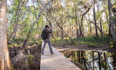 Boardwalk - Stephen C. Foster State Park - Okefenokee Swamp