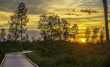Hiking Trail Boardwalk Sunset - Okefenokee National Wildlife Refuge - Okefenokee Swamp
