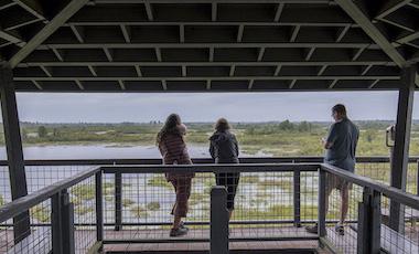 Observation Tower - Okefenokee Swamp