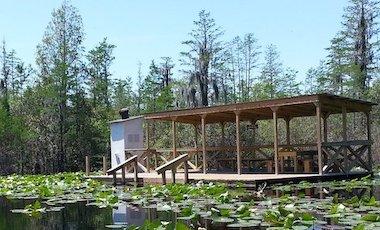 Overnight Camping Platform - Okefenokee Swamp