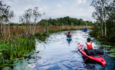 Kayakers - Okefenokee Swamp