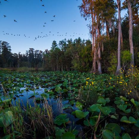 Dusk - Stephen C. Foster State Park - Okefenokee Swamp