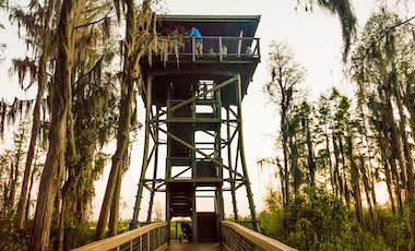 Observation Tower - Okefenokee Swamp