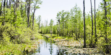 Okefenokee Swamp Park Canal